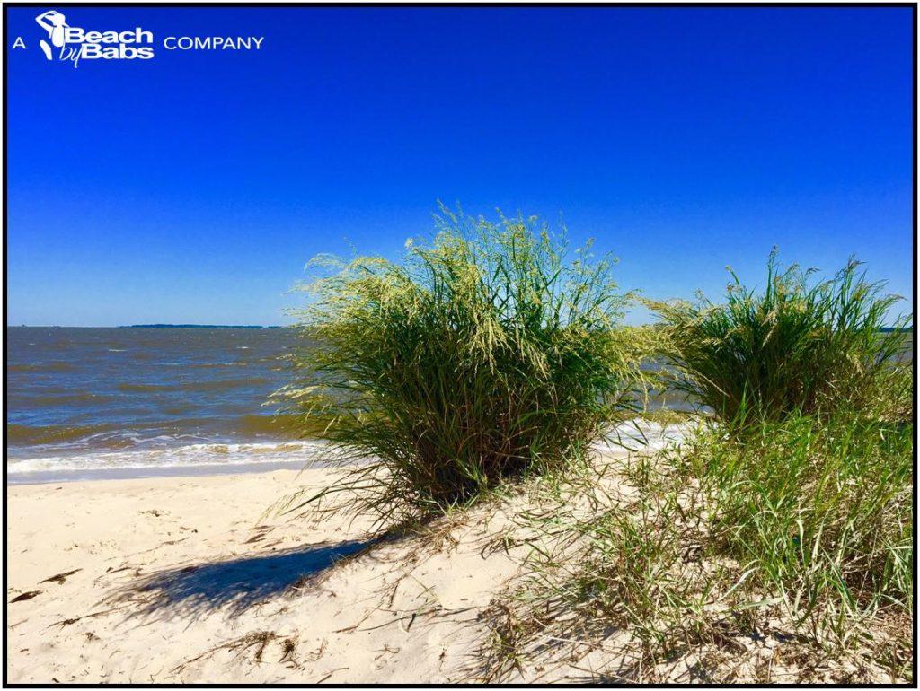beach grass.jpeg