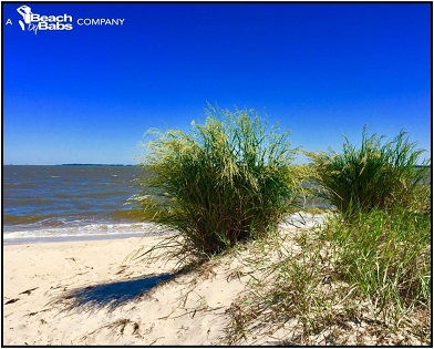 Why We Live Here . . . Cape American Beachgrass
